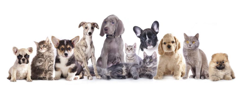 ペット専門リフォーム店の、ペットのためのリフォーム工事